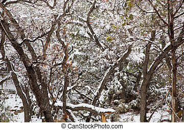 Nevada USA spring snow in the trees - Nevada USA spring...