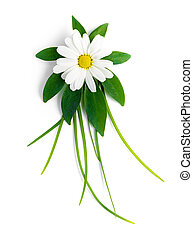 the flower of a chamomile is on a green leaf