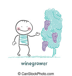 winegrower looks at grapes