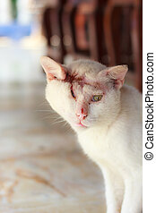 injured white cat , one - eyedwhite cat
