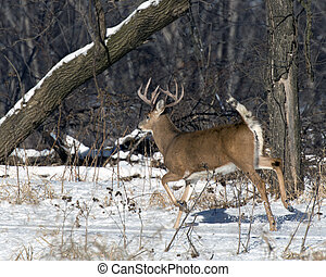 Running Deer - A large deer running in the winter