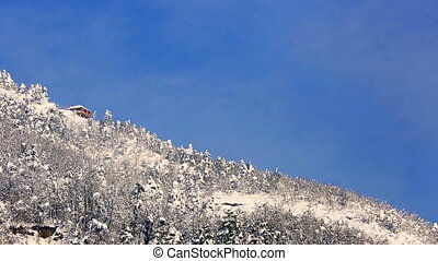 winter scenes - pine forest in winter, pan shoot