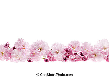 Cherry blossoms flower border