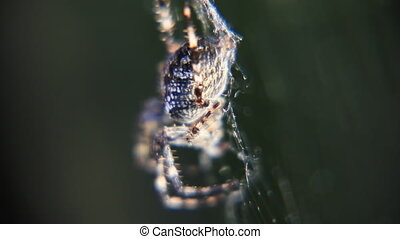 Spider in sunlights close-up