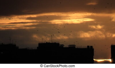 Birds flight over town - Birds flight silhouettes over...