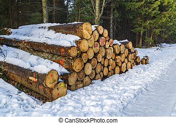Freshly harvested Scots Pine (Pinus sylvestris) logs on a...