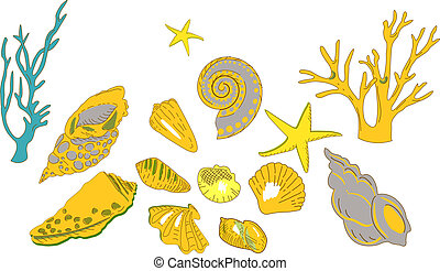Collection of colorful Sea Shells , Stars