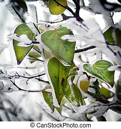 Leaves of a tree with ice and snow (winter picture)