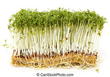 Delicious garden cress on white background