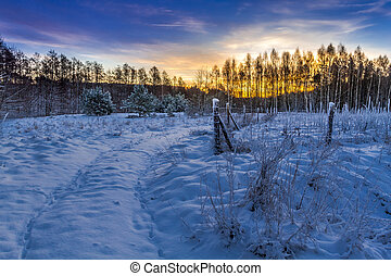Winter sunrise in the forest