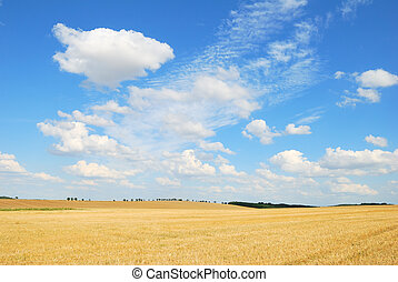 Grain field after harvesting with shite clouds in the blue sky