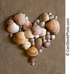 shell heart on sand - shell heart on the beach