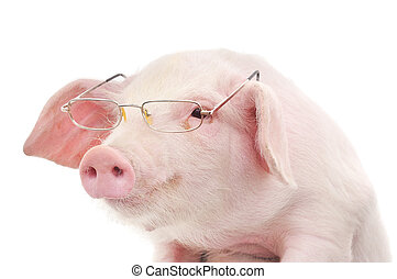 Portrait of a pig in glasses
