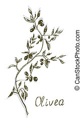 Olive branch painting hand drawn design