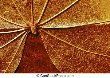 texture of  leaf - texture of leaf