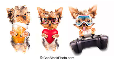 dog with beer, game pad and lover