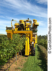 Harvesting Grapes - A grape harvester in a vineyard on the...