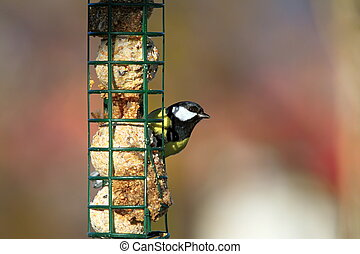 great tit on a fat feeder - great tit parus major standing...