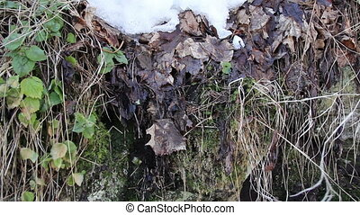 Some withered leaves with snow on top - Some withered leaves...
