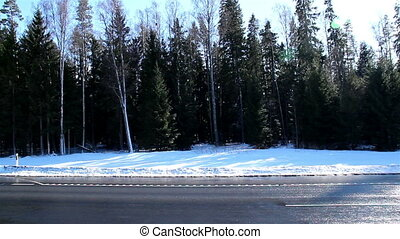 Tall pine trees on the side of the road with snow covering...