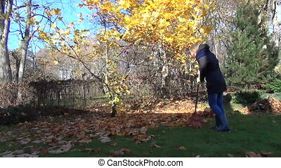woman rake golden leaves - Gardener girl rake golden...