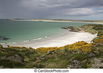 Gipsey Cove, beach, Falklands, near Stanley