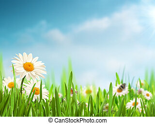 Bright summer afternoon. Natural backgrounds with beauty daisy flowers