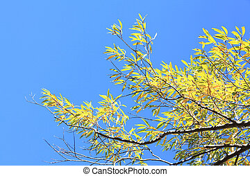 spring leaves against a background of blue sky