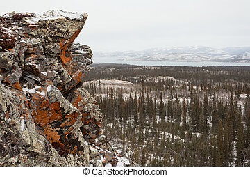 Orange lichen rock taiga Lake Laberge Yukon Canada - Orange...