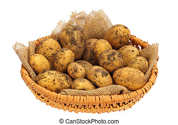 A basket of Potatoes - A basket of freshly harvested Organic...