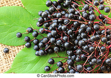 Elderberry (Sambucus Berries) - Freshly picked Elderberry...