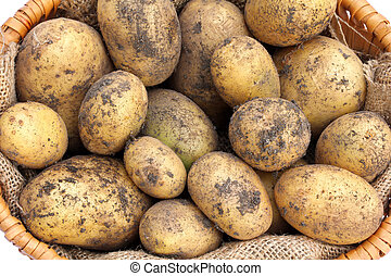 A basket of Potatoes with soil - A basket of freshly...