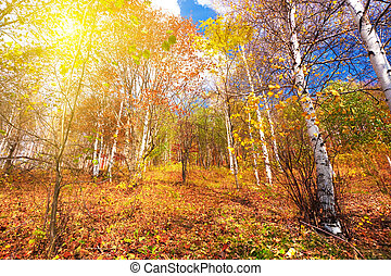 Autumn colors - Colorful autumn forest with sunny sky