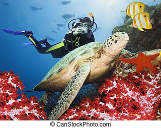 Green turtle underwater on a coral. Sipadan. Celebes sea