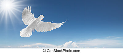 white dove in the sky - white dove flying on clear blue sky