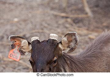 Deer Dappled in a zoo
