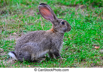 A hare on the grass - A hare sitting on the green grass