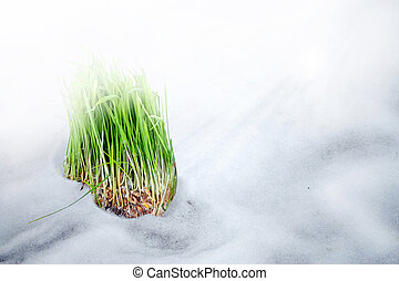 burgeon - Grass on the snow