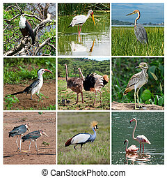 Collage of African birds