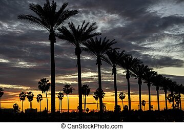 Anaheim Sunset - Palm trees on Gene Autry Way at dusk in the...
