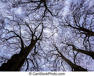 Tree silhouette against blue sky