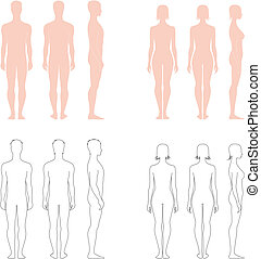 Human figure - Vector illustration. Set of male and female...