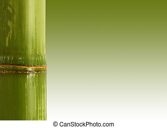 bamboo background - fine image closeup of bamboo with space...