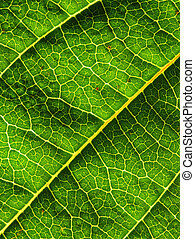 leaf background - fine closeup image of green leaf...