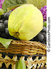 Quince - Grapes and quince among fruit...
