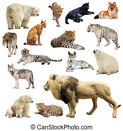 Set of predatory animals. Isolated over white background...
