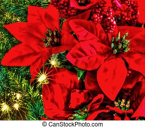 Holiday Background - Bouquet of poinsettias set against a...