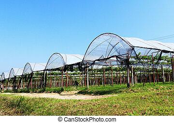 Hydroponic vegetable farm landscape