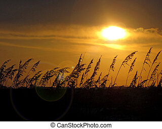 Golden sunset with sea oats; Perdido Key, Florida