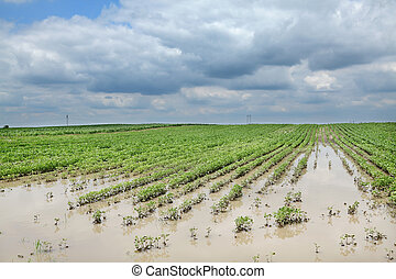 Agriculture, flooded soy field - Agricultural natural...